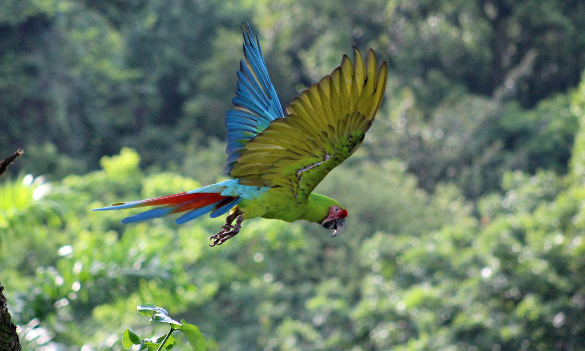 Retired in Costa Rica
